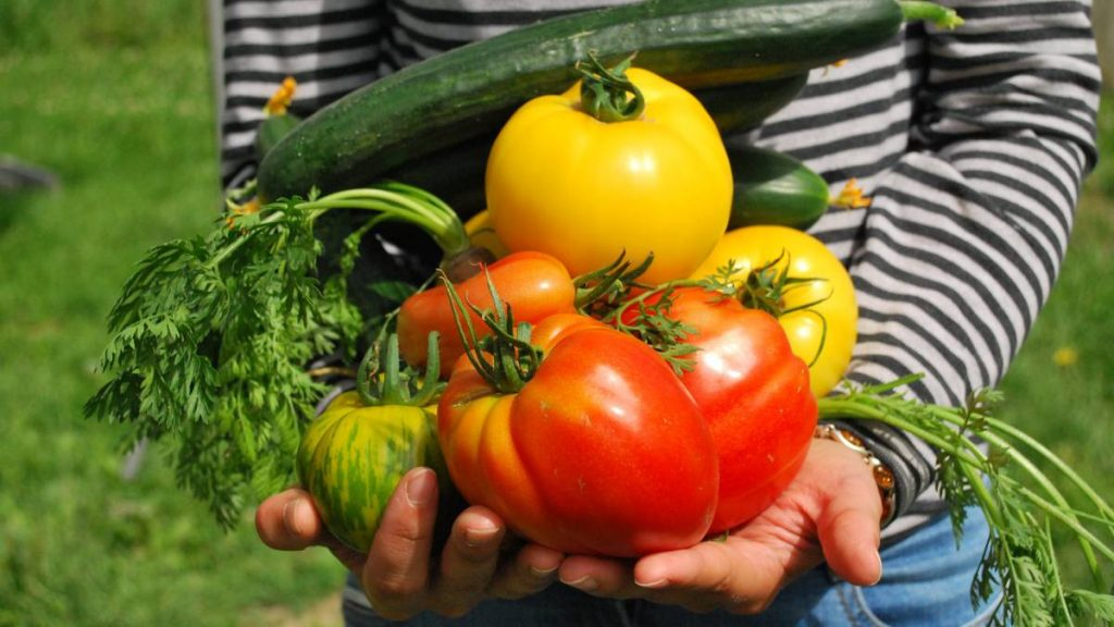 comida organica productos organicos