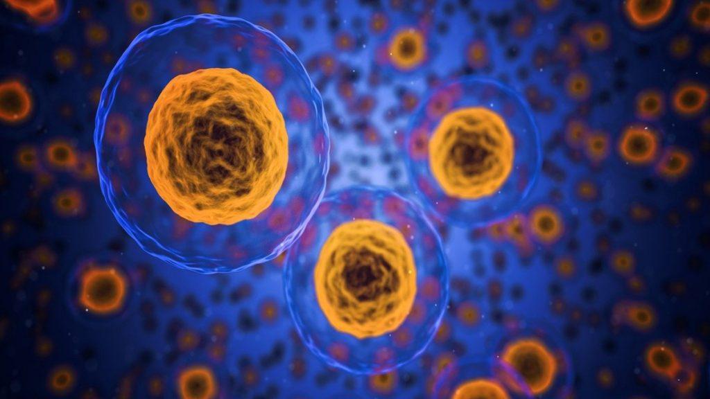 inflamación celular como combatirla